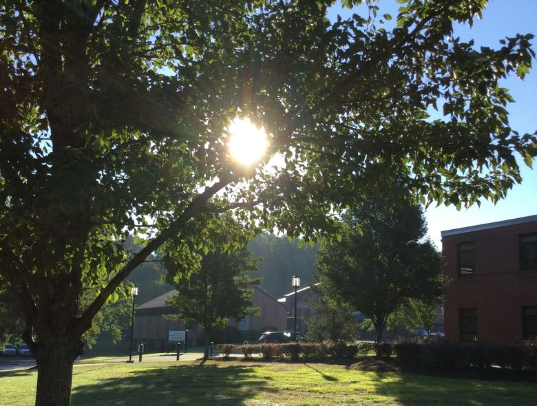 sun shines through tree